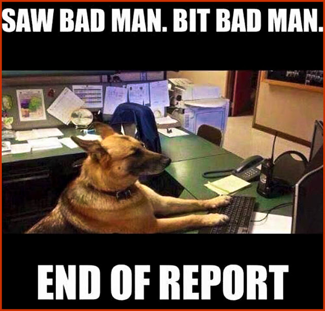 Saw Bad Man. Bit Bad Man. End Of Report! ...hate paperwork... | #funny #gsd #K9 #relatable #dogs