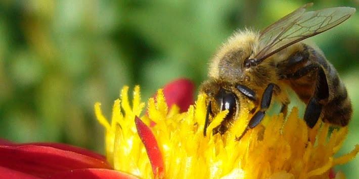 Domáce výrobky, med
