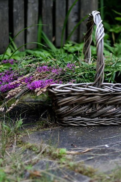 fleurs,des,champs,cueillette,salicaire,quebec,blog,anthracite-aime,blogue