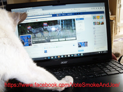 https://www.facebook.com/VoteSmokeAndJoe/