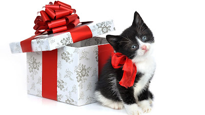 Kat en cadeau met strik