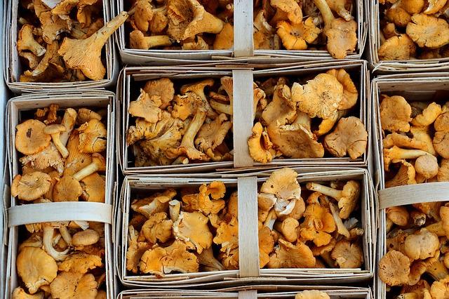 Grzyby zawierają cenne witaminy i minerały. Chityna i betaglukan stanowią podstawę preparatów na odchudzanie i regulowanie apetytu.