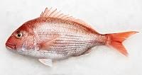 Mercan balığının yandan görünümü