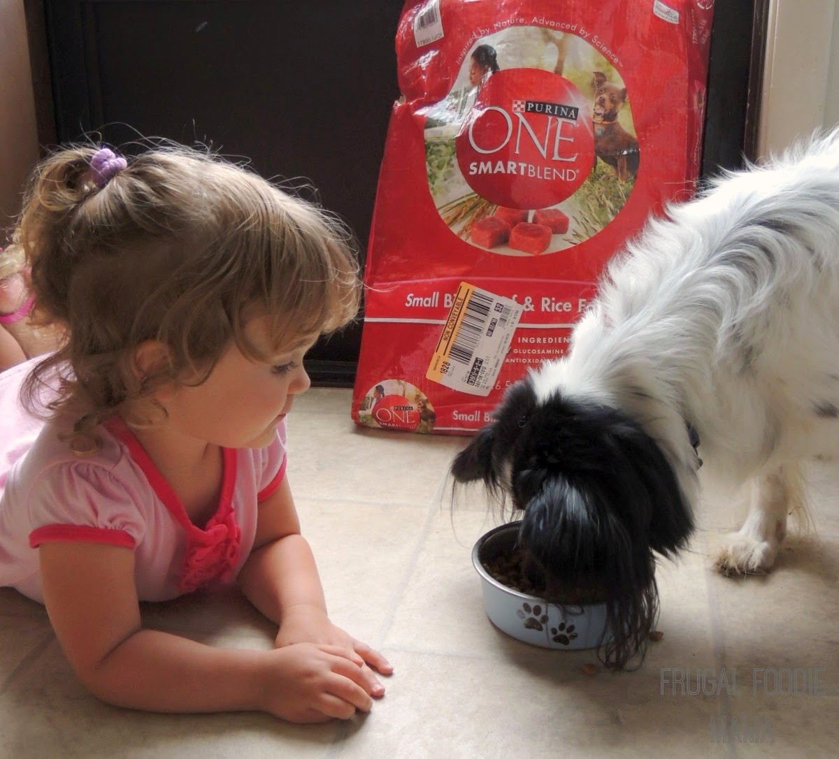 Let me introduce you to Charlie and the Purina One 28 Day Challenge via thefrugalfoodiemama.com #ONEDifference #PMedia #ad
