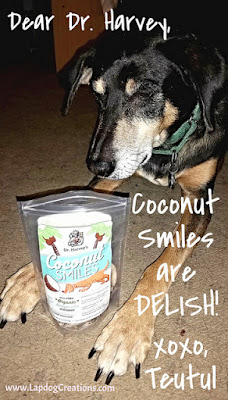 Teutul thinks Dr. Harvey's Coconut Smiles are delish! - Lapdog Creations #dogtreats #organic #Chewy #DrHarvey #coconutfordogs #seniordog #houndmix
