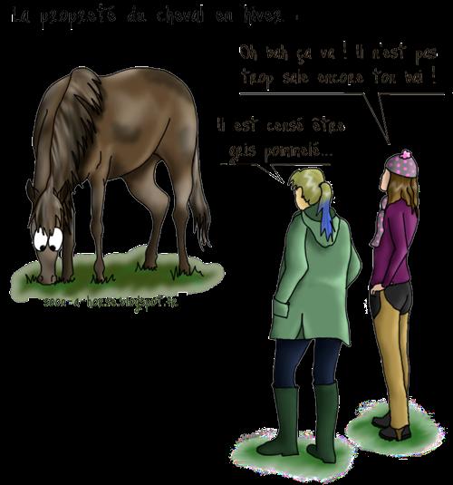 soon a horse comment garder son cheval presque propre en. Black Bedroom Furniture Sets. Home Design Ideas
