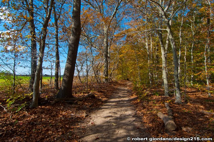 A wooded path on Long Island, New York, Copyright 2010 Robert Giordano