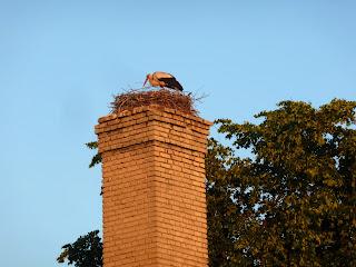Лунинец. Гнездо аистов на дымаре
