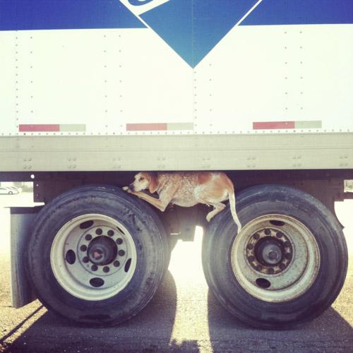 maddie on eighteen wheeler tires