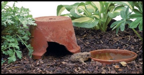 Content in a Cottage: DIY Toad Abode from Old Flower Pot
