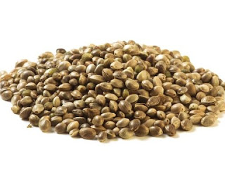 गांजा पीने के फायदे | Benefits of Hemp Seeds