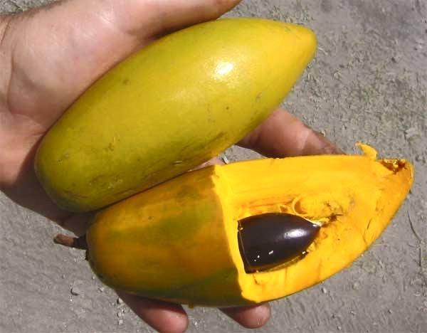 buah alkesah yang sudah matang