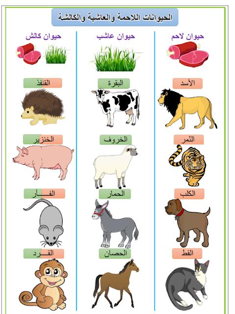 التغذية عند الحيوان، الحيوانات العاشبة، الحيوانات اللاحمة، الحيوانات الكالشة