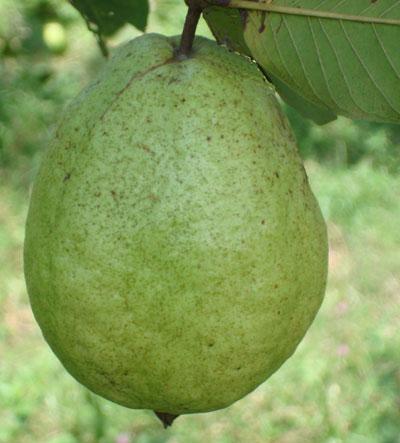 desktop bangladesh fruits pictures - photo #3