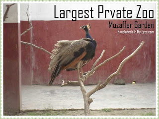 Largest-Private-Zoo-mozaffar-garden