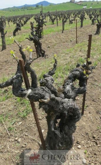 Rượu vang Mỹ có gì đặc biệt?