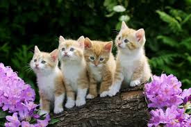 New Baby Cats Animal Hd Wallpape49