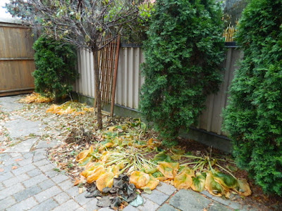 Oakwood Village Toronto Fall Backyard Cleanup by Paul Jung Gardening Services before