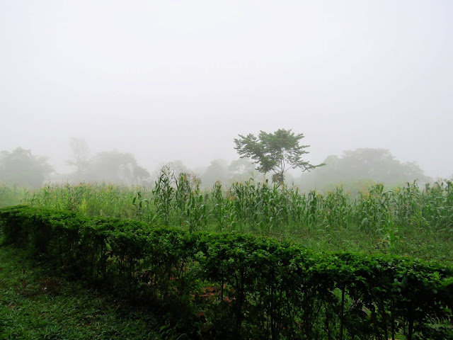 Uganda's Bigodi Wetlands