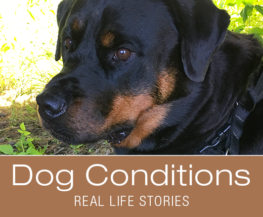 Dog Conditions: Real Life Stories - Observation Skills for Dog Owners: Observe, Analyze, Deduce
