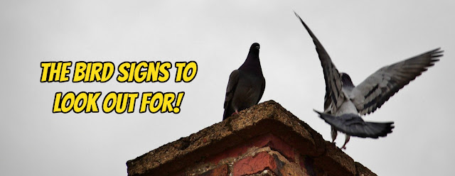 The bird signs to look out for