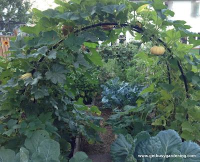 Squash arch with squash and pumpkins