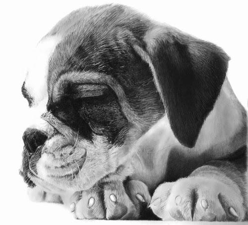 15-Dog Puppy-Franco-Clooney-Francoclun-www-designstack-co