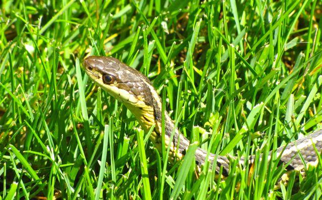 Diane Carnevale Snake In The Grass