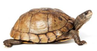 Kaplumbağaların özellikleri
