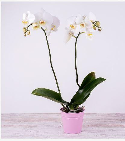 regalos orquídeas flores descuento
