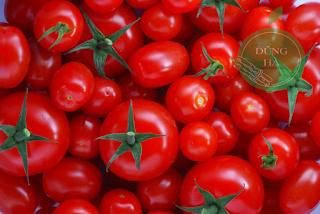 Hướng dẫn trồng một số loại rau vụ đông tại nhà - 2