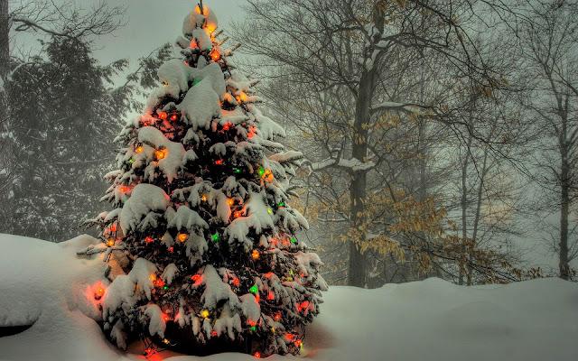 Kerstboom buiten in de sneeuw met kerstverlichting aan