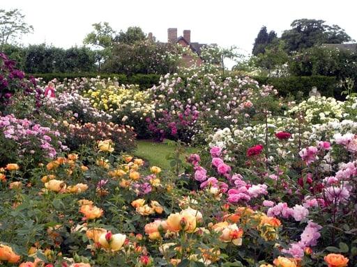 Roses-garden-park-pushkar-india