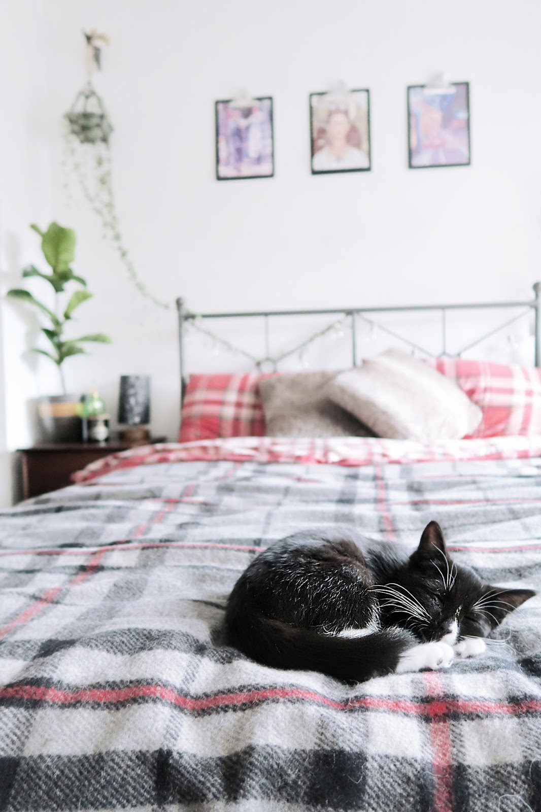 HYGGE for your cat🦁 (+20 cat toys!)​