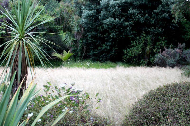 Praderas de Stipa. Jardín Nueva Zelanda. Jardin plantas clima mediterráneo (Domaine du Rayol) diseño: Gilles Clement