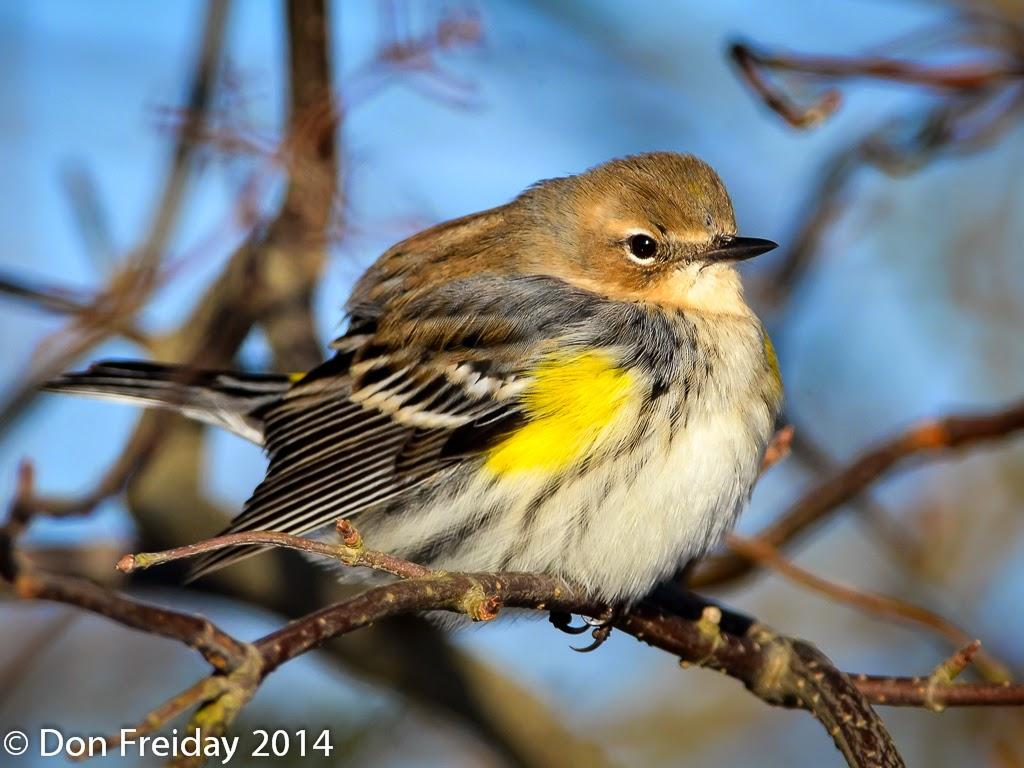 The Freiday Bird Blog Word Is