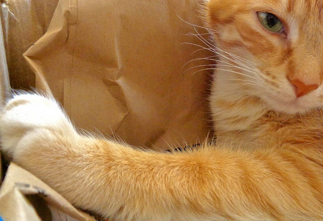 Tabby Cat and Paper Bags