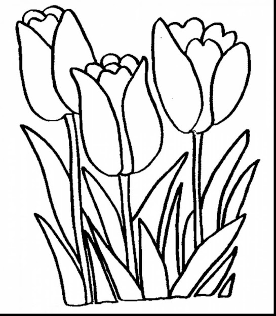Remarkable Printable Tulips Flower Coloring Pages With Printable Flower  Coloring Pages And Printable Spring Flower Coloring