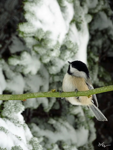 Bird in Winter Photo