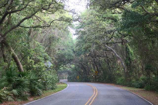 ... their far reaching limbs form a canopy over the road. Riding through the thickest ones gives the impression that you are riding through a tunnel. & Rocket and Me: Canopy Roads