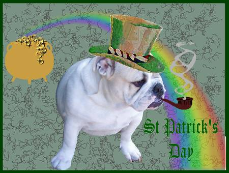 Happy St Patrick S Day Fun Animal Pictures Let S