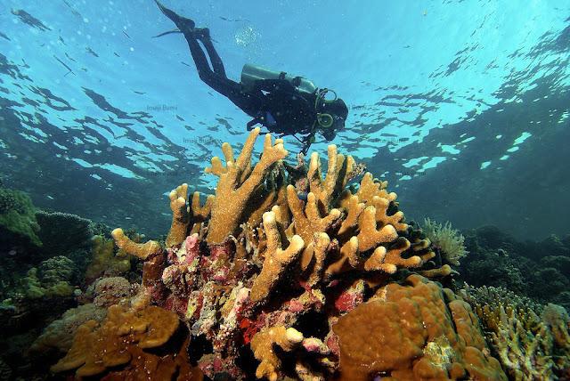 """Pesona Darat dan Bawah Laut Nusantara Nomor Tiga Dunia """"Taman Nasional Takabonerate Sulawesi Selatan"""""""