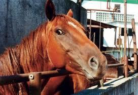 Cavalo com cara de esperto dando uma olhada por baixo dos ombros