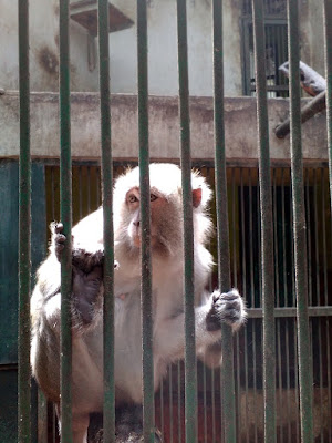 Monyet Kebun Binatang Ragunan