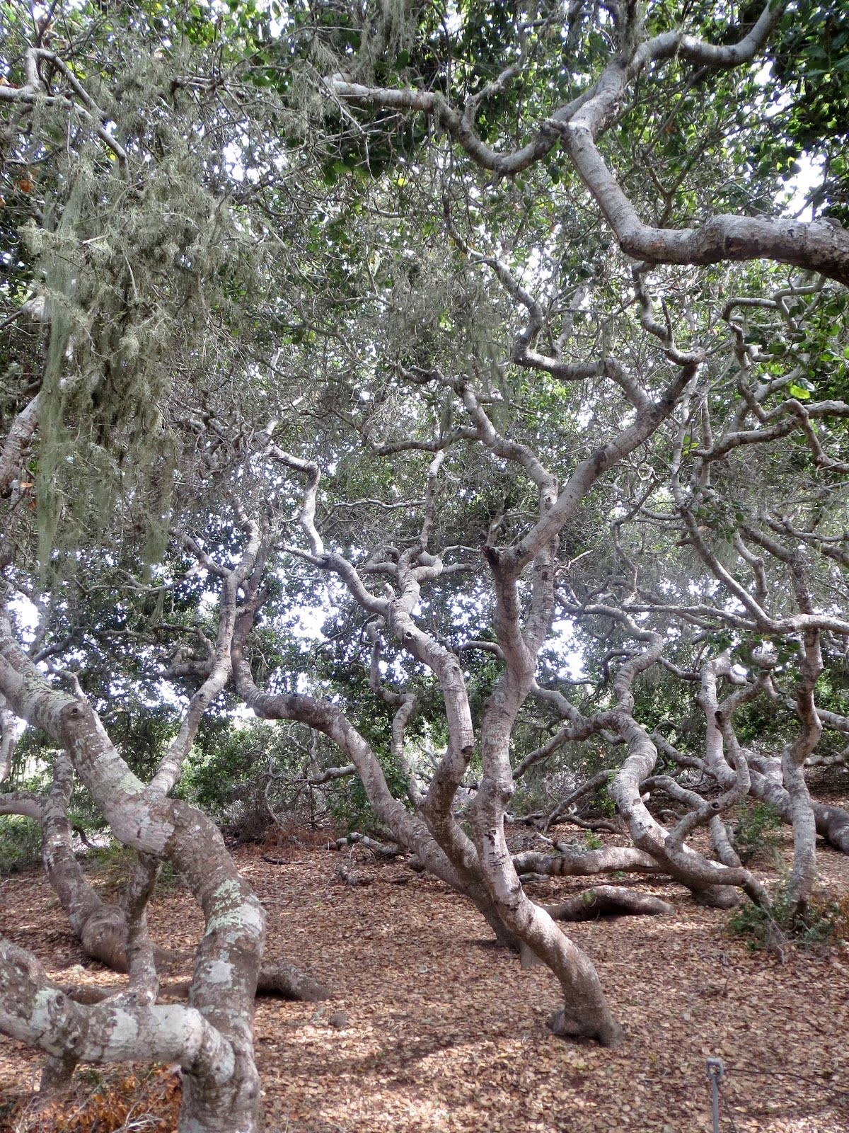 The Elfin Forest: A Land of Mythical Woodland Beings? Maybe Not Quite...