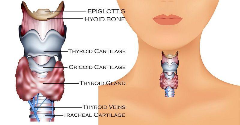 Os 13 Principais Sinais de Que Você Pode Ter um Distúrbio da Tireoide