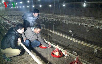 Phóng viên VOV tìm hiểu về trang trại gà của anh Tuấn.