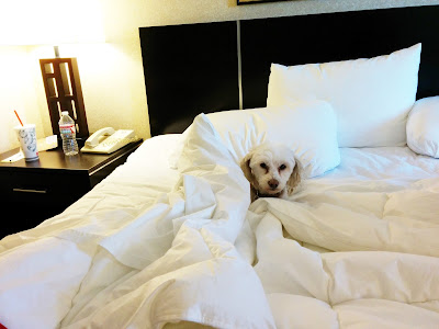 Tips for travel with pets, Tips for road trips with dogs, dog friendly, pet friendly, travel with dogs, Road Trips, Dogs