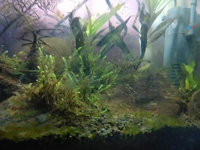 aquascape kecil