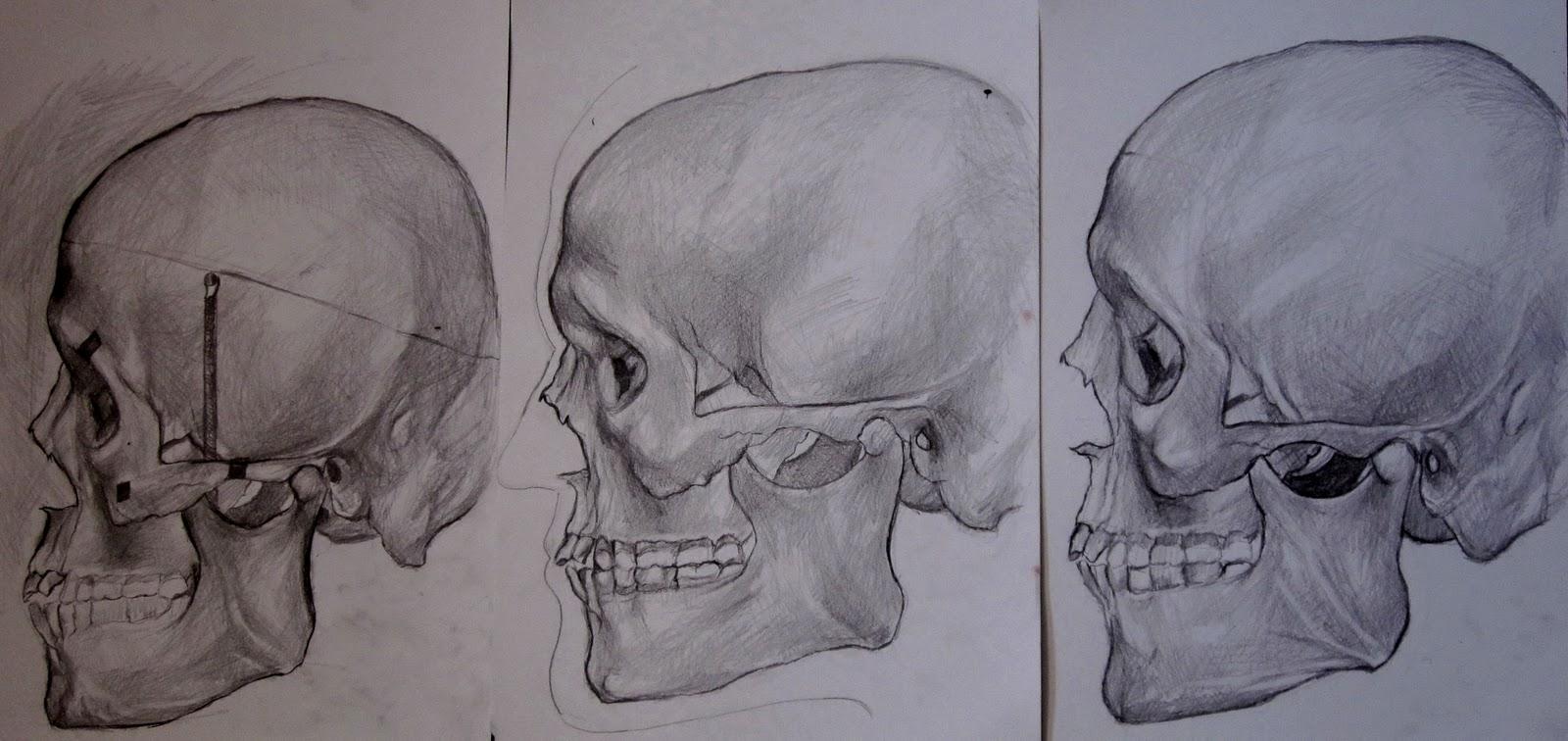 ILMU FAAL & Anatomi Tubuh Manusia